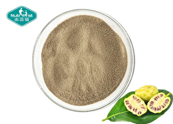 China Dry Place Storage Noni Fruit Powder , Noni Juice Powder For Healthy Body Weight supplier