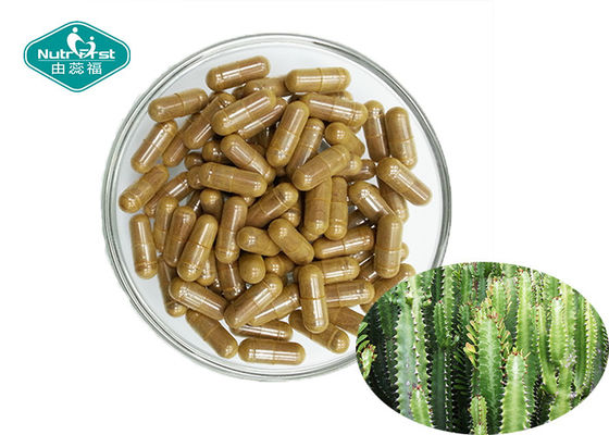 Natural Appetite Suppressant Energy Hoodia Cactus Capsules 500mg For Weight Loss