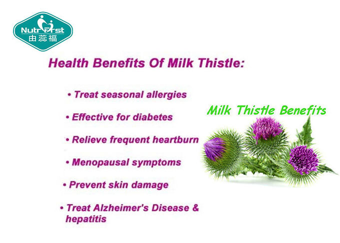 Pure Milk Thistle Extract Excellent Supports Liver Detoxification Reactions